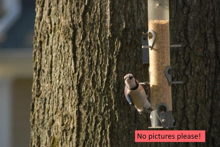 nopictures.jpg