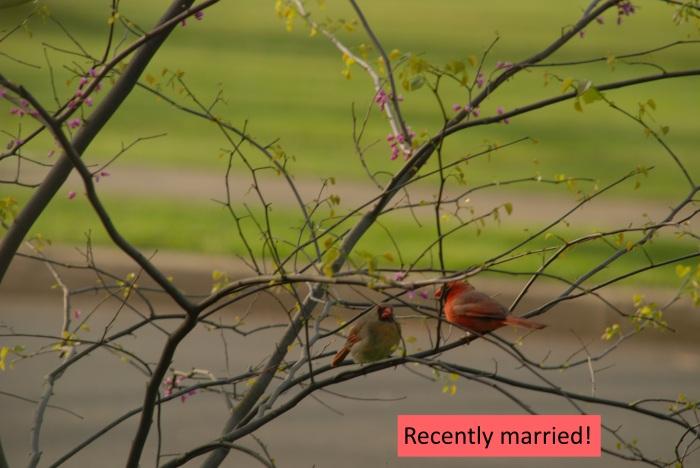 recentlymarried.jpg
