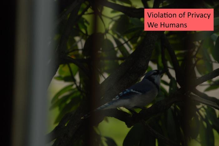 violation.jpg